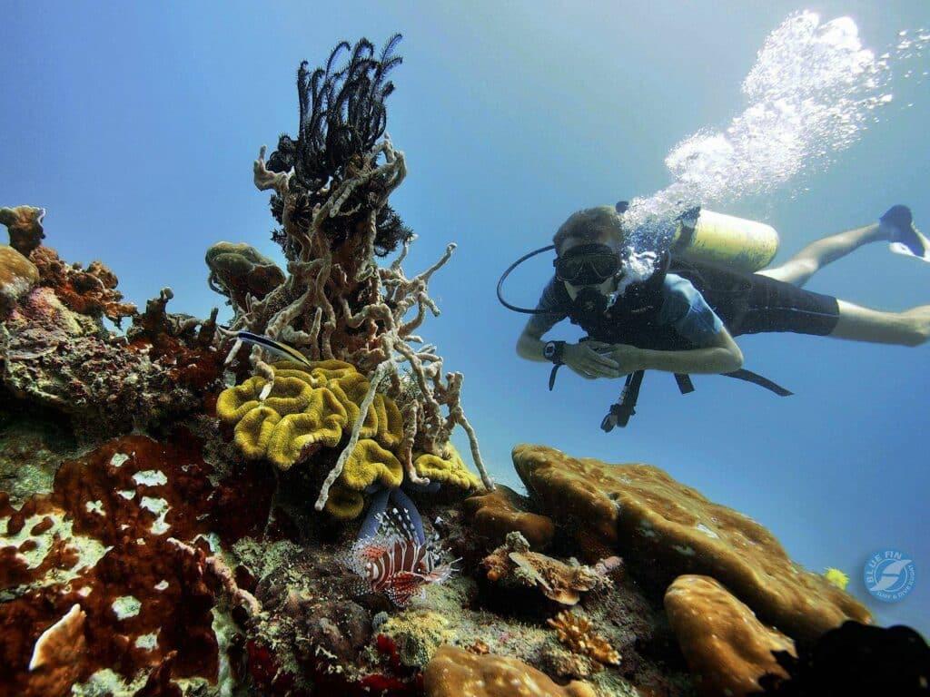 Hier siehst Du mich am Tip of Borneo Tauchen. Vor mir ist ein Lionfish zu sehen