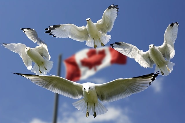 Steuerfrei mit einer Kanada LP